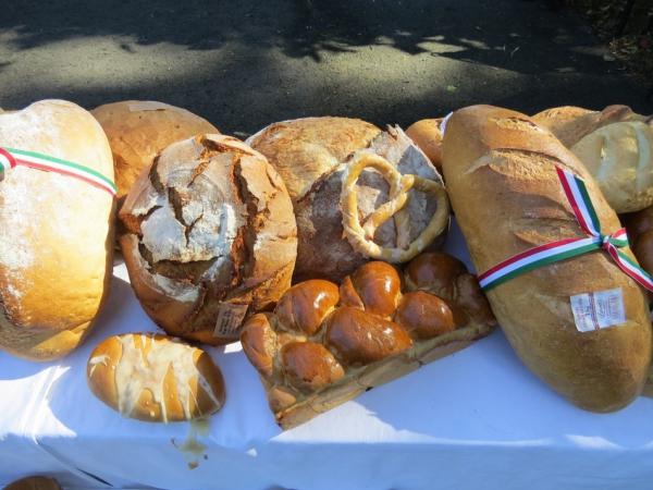 Alföldi kenyér, szőlő és bor ünnep