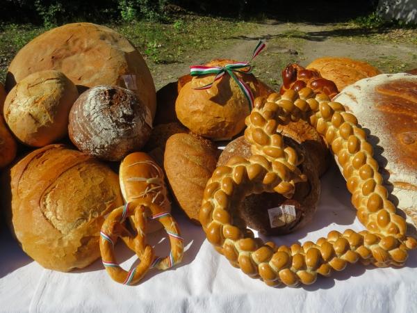 Az alföldi kenyérről, szőlőről és borról tartottunk konferenciát