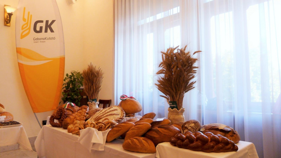 Alföldi kenyér, szőlő és bor - 2016